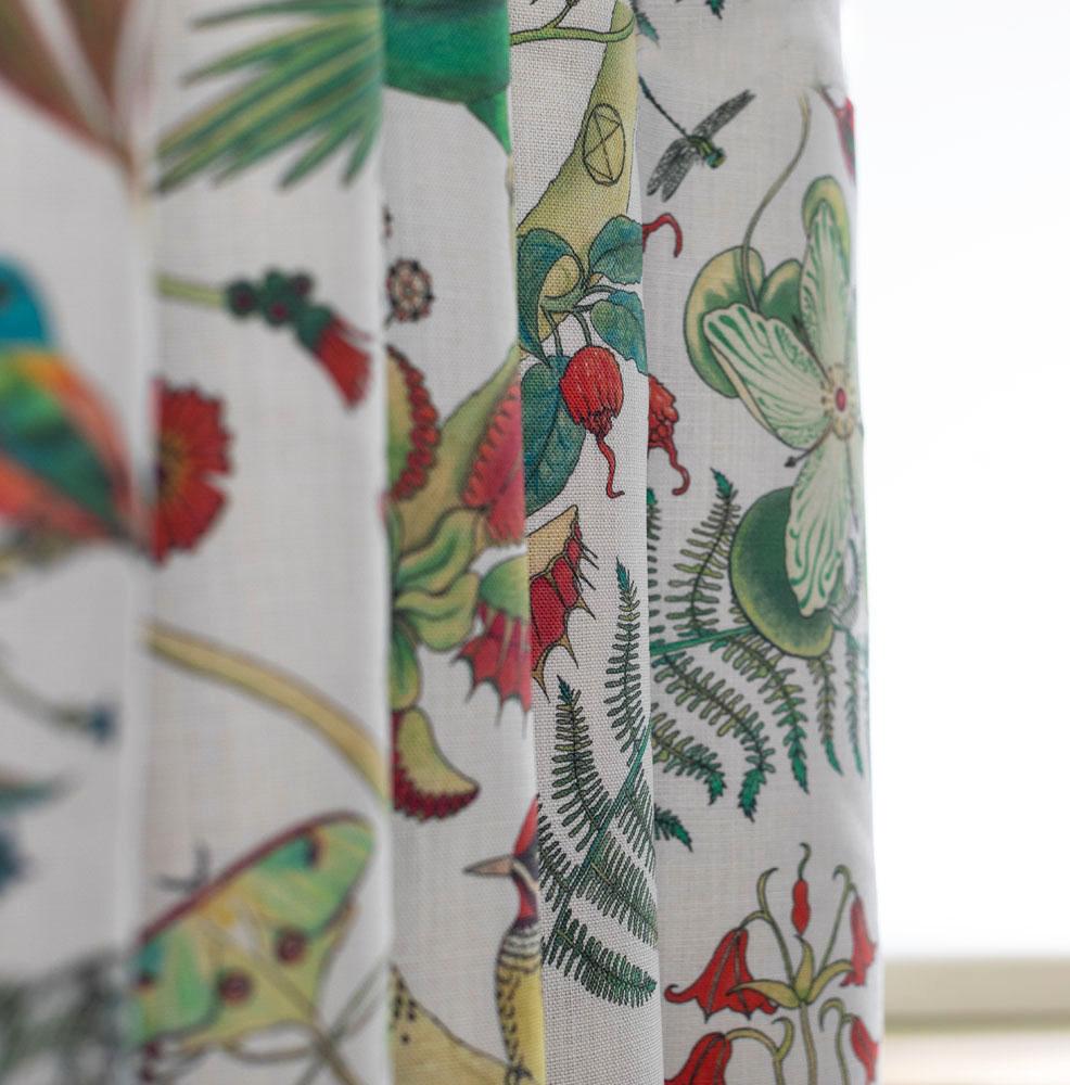 Carolina Parakeets - Natural