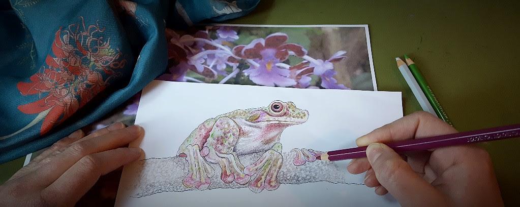 Rabb's fringe limbed treefrog