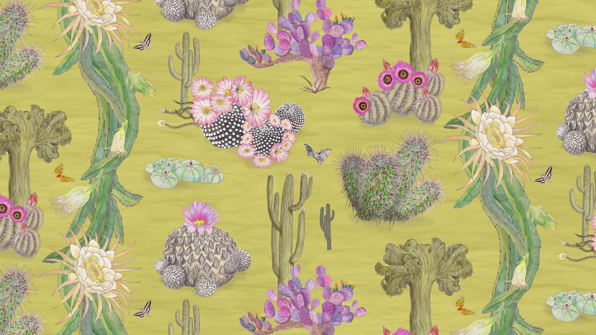 Cactus design in Limon