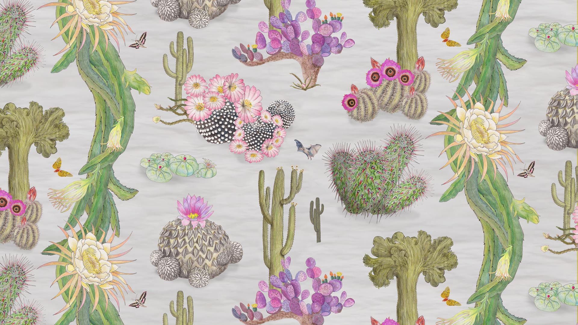 Mexican Cactus in Dove
