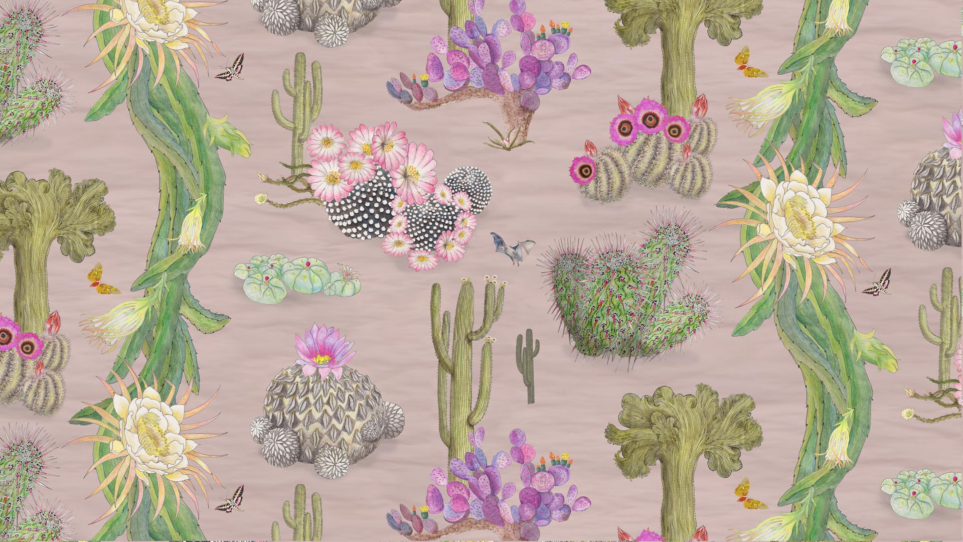 Mexican Cactus in Blush