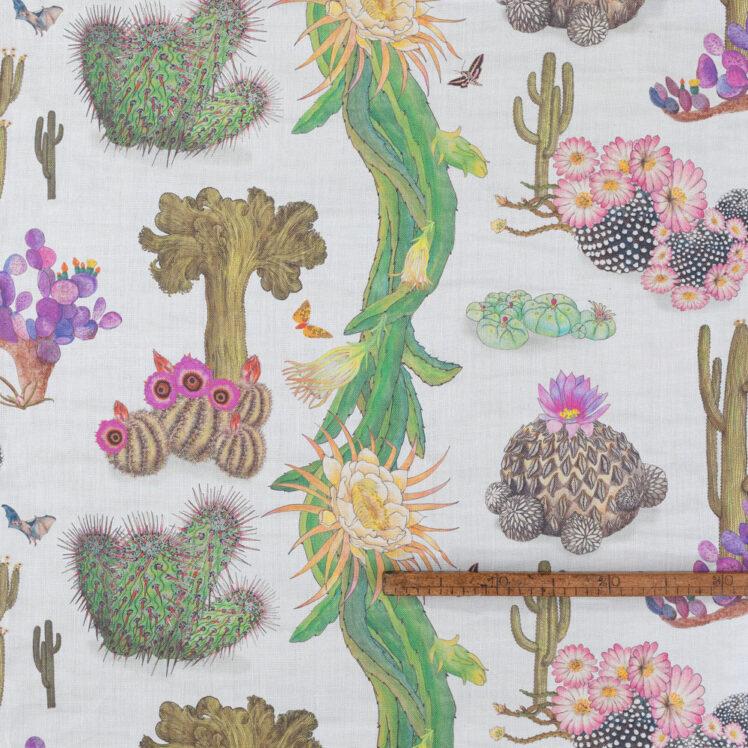 Cactus Mexicanos Dove R