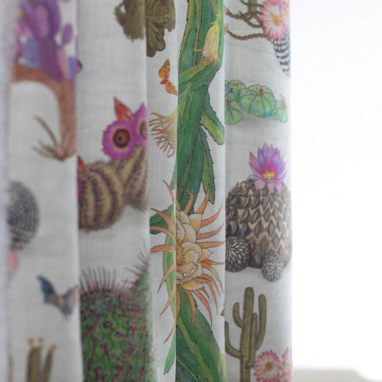 Cactus Mexicanos Dove Undul