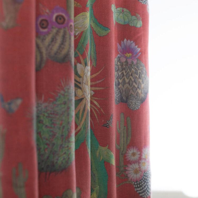 Cactus Mexicanos Sangre Nat Undul